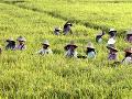 Na snímke mjanmarské roľníčky