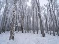 Malé Karpaty pod snehovou