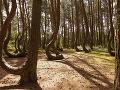 Čarovný les, Poľsko
