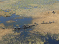 Levy v Botswane