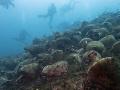 Pri gréckom ostrove Alonnisos