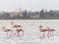 Soľné jazero, Larnaka, Cyprus