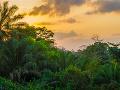 Dažďový prales v Libérii