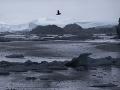 Ľadovec Jakobshavn