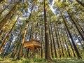 Cabanas en los árboles,