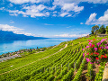 Vevey, Švajčiarsko