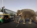 Mahaut so svojím slonom