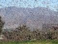 Invázia kobyliek