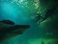 Na snímke potápači plávajú