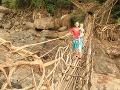 Živé mosty Meghalaye