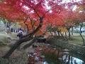 Jeseň je v Japonsku