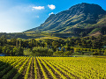 Cape Winelands, Juhoafrická republika