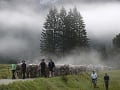 Bavorskí pastieri vedú dobytok