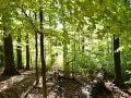 Národná prírodná rezervácia (NPR)