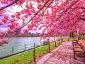 Park Ueno v Tokiu
