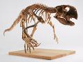Ilustračná fotografia kostry psittacosaura.
