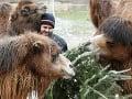 Nepredané vianočné stromčeky spestrujú