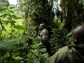 Gorilí stopár Fidele hľadá