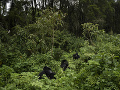 Gorily Urwibutso, Segasira a