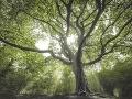 4. miesto - Strom