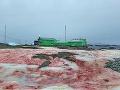 Červený sneh na Antarktíde
