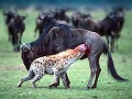 Krvavé divadlo v Keni