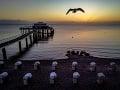 Čajka letí nad mólom
