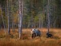 Divoká tajga, Fínsko