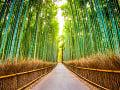 Bambusový les Arashiyama