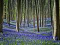 Modrý les Hallerbos