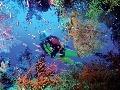 Bohatý podmorský život láka