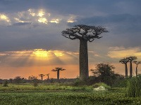 Avenue baobabov, Madagaskar