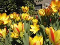 VÝLET Botanická záhrada v