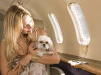 Toto by ste nechceli zažiť: Zvieratá vedia leteckú dopravu poriadne skomplikovať