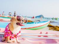 RADÍME: Na dovolenku sa