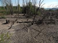 Rašeliniská Krivý kút a Trstinné lúky - veľmi neobvyklý kúsok našej krajiny