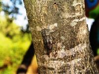 Výnimočný tvor, ktorý patrí ku každej letnej dovolenke: Top zaujímavosti o cikádach