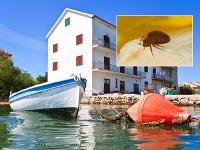 Ďalšia pohroma: Chorvátsky denník upozorňuje na ploštice v apartmánoch