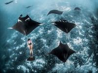 Svetové oceány sa rekordne