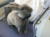 Coco cestuje ako kráľ