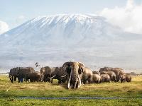 Slon pred horou Kilimandžáro