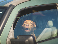 Polícia upozorňuje: Psovi hrozí