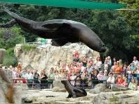 Zoo Viedeň
