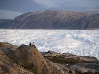 Arktída