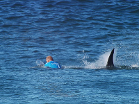 Slávny surfista sa venuje