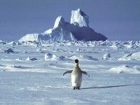 Osamotený tučniak na Antarktíde