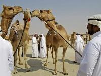 Ťaví festival, Abu Zabí