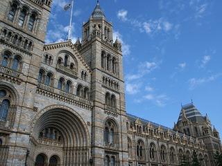 Prírodopisné múzeum, Londýn, Veľká