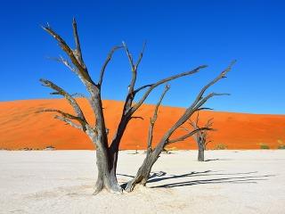Tisícročné kvety uprostred púšte: