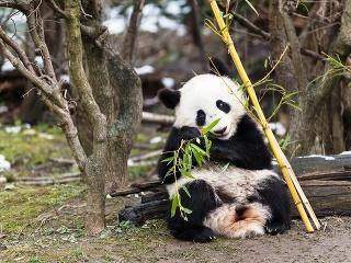 V Číne vznikne chránené